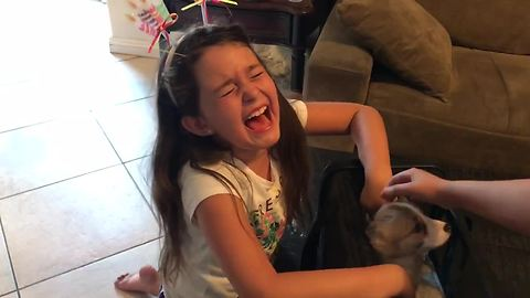 New Puppy Surprise Moves Little Girl To Tears Of Joy
