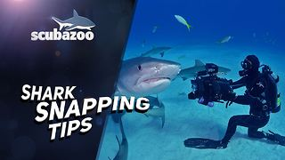 Shark Week: How to photograph a shark - Video