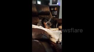 His owner brought a new pup home and this dog definitely isn't amused - Video