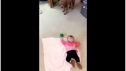 Dog tries to teach baby how to play fetch