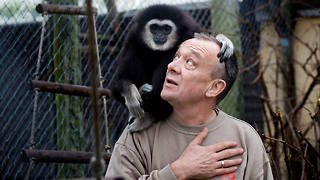 The Orphaned Gibbon Looking For Love | CUTE AS FLUFF - Video