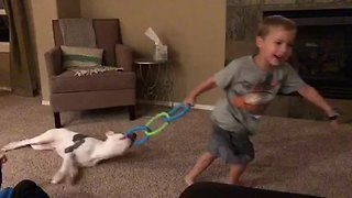 Kid plays tug-of-war with his puppy