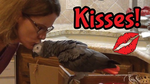 Einstein the Parrot exchanges kisses with owner