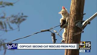 Cat rescued off of pole in Phoenix - Video