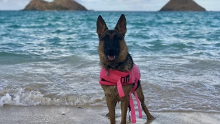 Saskia loves the beach - Video