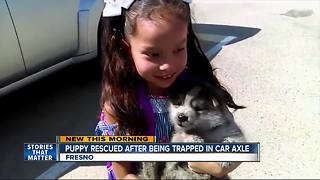 Puppy rescued from car's axle