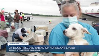34 dogs rescued ahead of Hurricane Laura