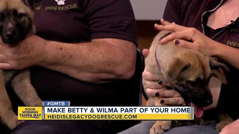 Rescues in Action: Wilma & Betty