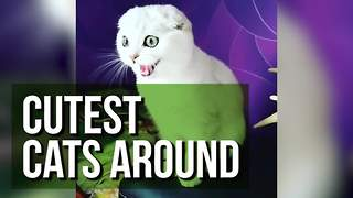The Compilation Showcases The Cutest Cats Around! - Video