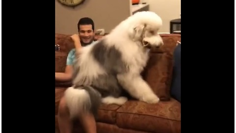 Go Inside This Dog's Head To Hear What Is Being Said!