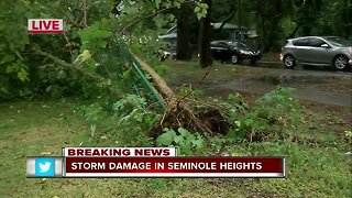 Storm knocks down trees in Seminole Heights 530pm