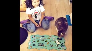 Beautiful little girl loves and plays with American Curl too