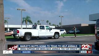 Marley's Mutts going to help rescue animals in Texas - Video
