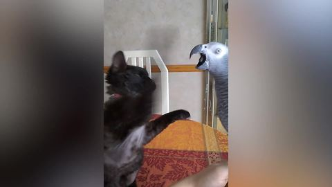 A Cat And A Parrot Get Into A Fight