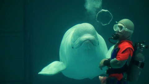 Japanese Whisperer Teaches Beluga Whale To 'Talk'
