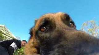 Mischievous Dog Refuses to Give GoPro Back - Video