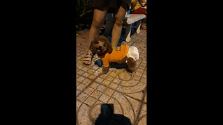 Puppy wear diaper too cute...... puppy and mom so lovely  - Video