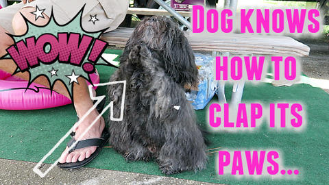 Dog can Clap