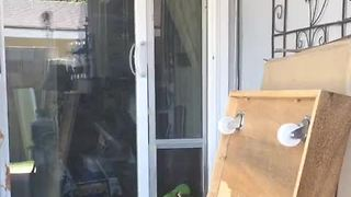 Clever parrot uses doggy door to exit house - Video