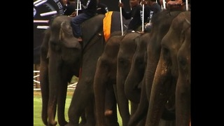 Elephant Polo - Video