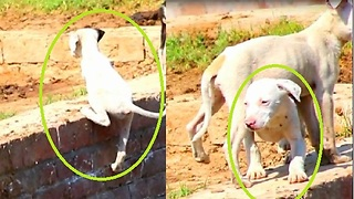Watch crazy Puppies activites Be different from any other puppy you've ever met  - Video