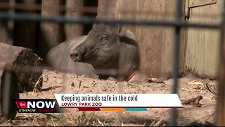 Keeping animals safe in the cold - Video