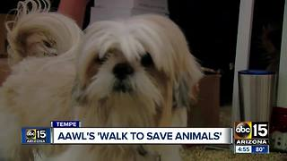 AAWL'S walk to save animals event in Tempe - Video