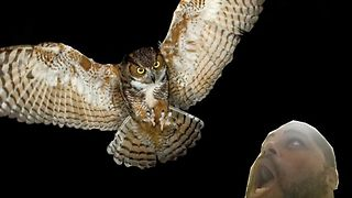 Owl Attacks Fisherman  - Video