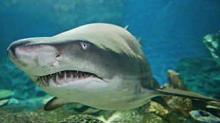 Incredible Shark Aquarium - Video