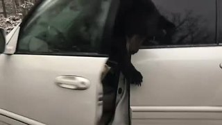Visitors at Gatlinburg, Tennessee, cabin find bear trapped inside their car - Video