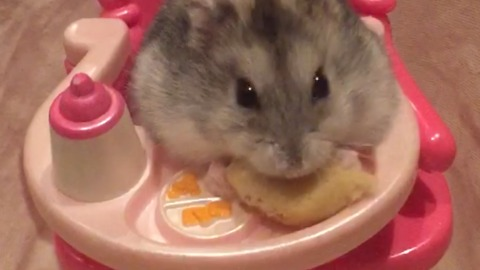 A Hamster Eats A Snack In A Doll Chair
