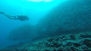 Scuba diver gets lost in enormous school of fish - Video