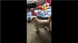 High-Energy Pup Entertains A Laughing Baby