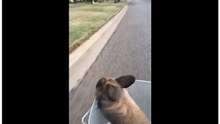 Bunny thoroughly enjoys relaxing bike ride - Video
