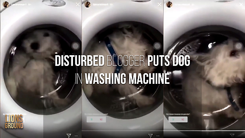 Innocent dog put in washing machine by disturbed blogger