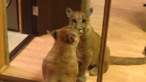 Puma Messi first time saw his reflection in the mirror