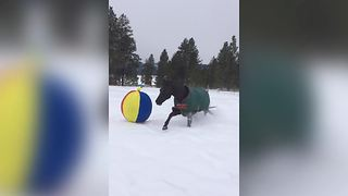 """Adorable Horse Plays With A Beach Ball"""