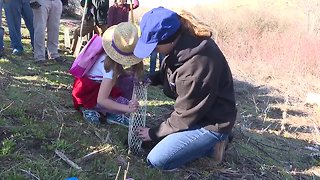 Planting shrubs in Hulls Gulch becomes a community effort in Boise