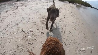 Fort Myers dog beach reopens