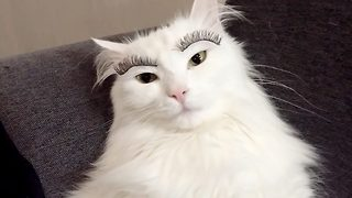 Watch this cat's hilarious reaction to wearing false eyelashes - Video