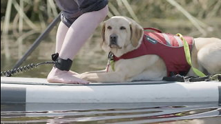 Diabetic Alert Dogs Trained to Save Lives - Dogs4Diabetics