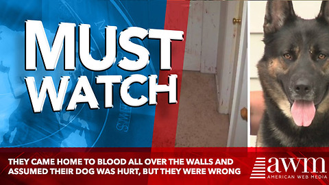 They Came Home To Blood All Over The Walls And Assumed Their Dog Was Hurt, But They Were Wrong