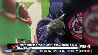 Immokalee firefighters rescue kitten - Video