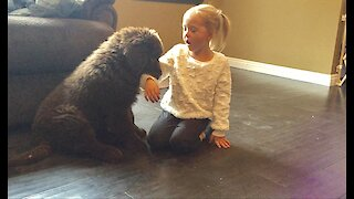 Patient girl deals with teething Newfoundland puppy