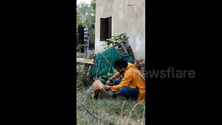 Kind volunteer rescues stray dog with plastic jar stuck on its head - Video
