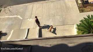 Talented Dog Catches Treats Thrown From Second-Story Patio