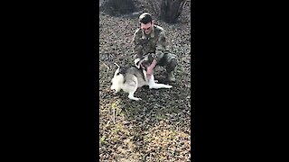 Husky Reunites With Owner Returning Home From Deployment
