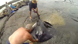 Amazing moment stingray is being rescued