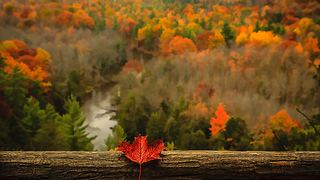 Beautiful Fall Photos - Video