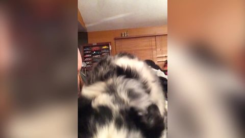 This Pup Can Sing So Beautifully, Almost Like An Angel